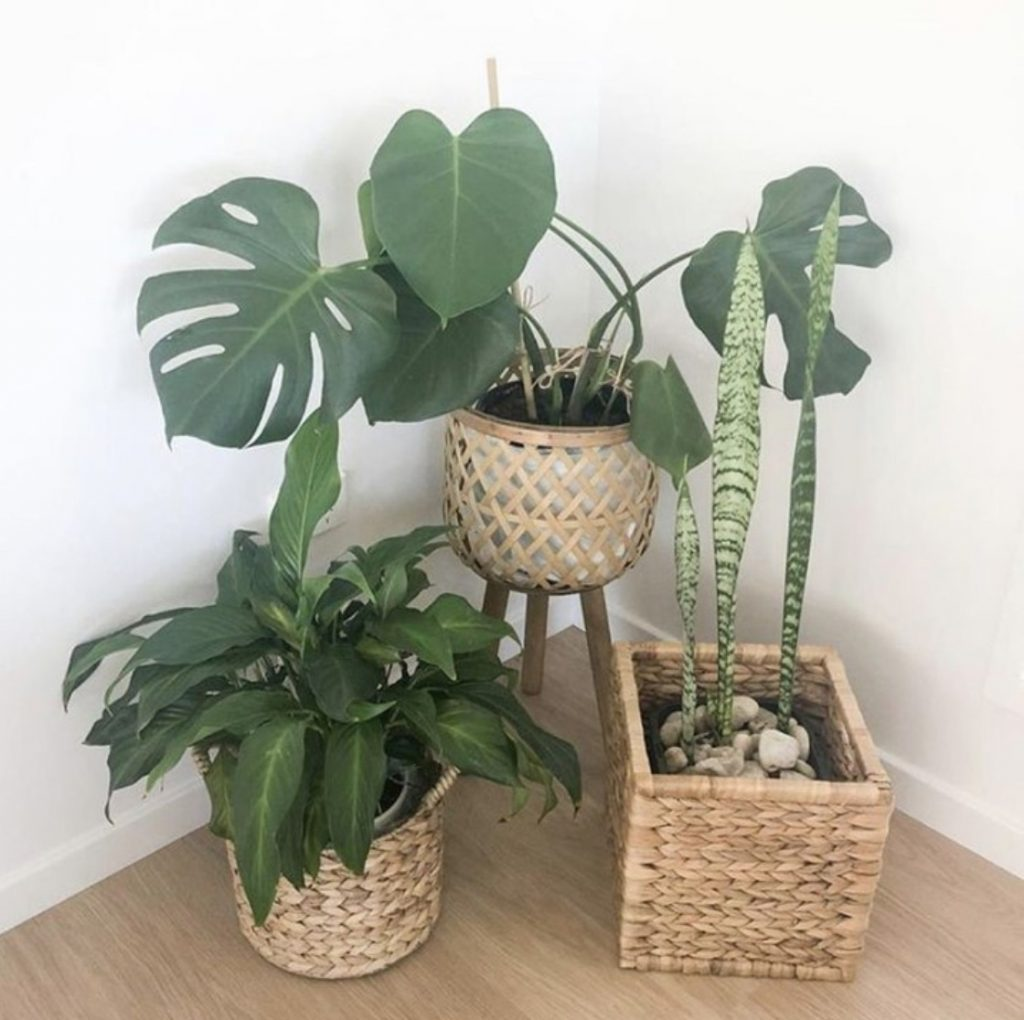 how to protect your flooring with indoor plants by keeping them off the floor