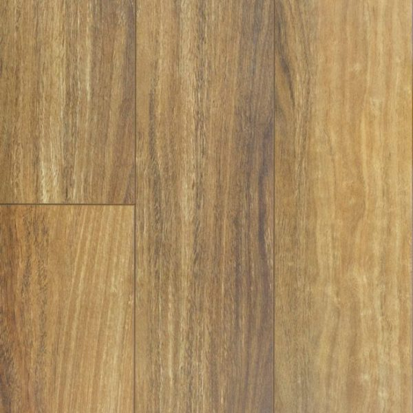 Audacity Spotted Gum